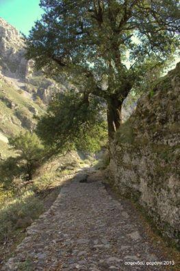 olive harvest crete